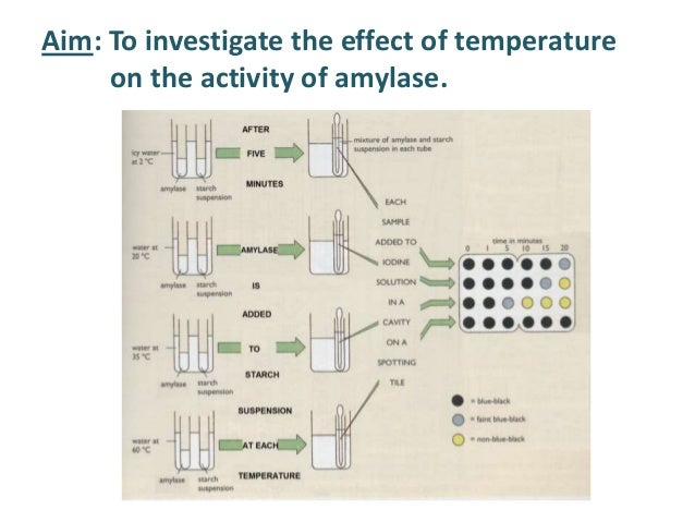 effect of ph on enzyme activity Effects of ph enzymes are affected  of activity for most enzymes ph is also a factor in the stability of enzymes as with activity, for each enzyme there is also.
