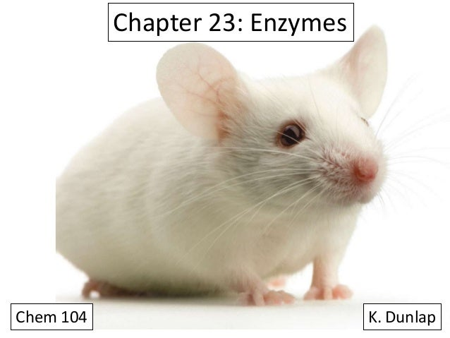 Chapter 23: Enzymes  Chem 104  K. Dunlap