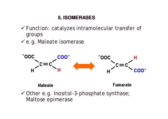 the characteristics of catalase an enzyme Catalase is an enzyme found in most living cells it breaks down hydrogen peroxide into water and oxygen 10 what is a substrate a substrate is the molecule or molecules on which an enzyme works 11.