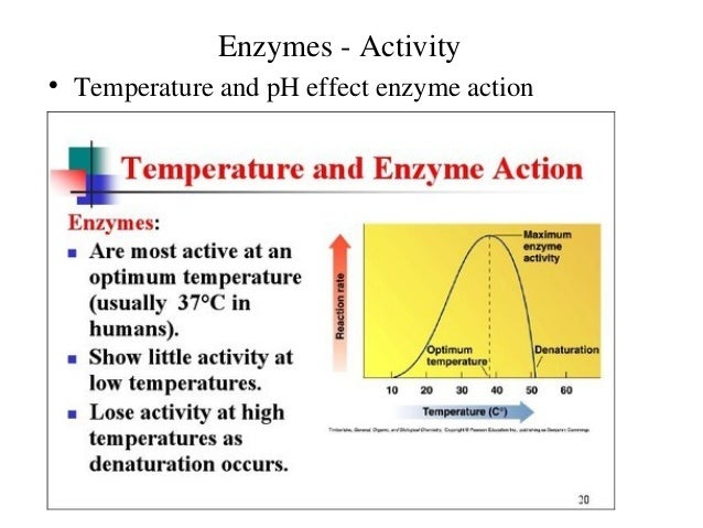 an experiment presenting the effect of temperature changes on enzyme activity Finally the treatment of experimental data to estimate the enzyme activity is  described  enzymes are sensitive substances present in small amounts and  their activity in  two different effects are responsible for this behaviour: (i) the  state of protonation of  therefore the ph changes with the temperature and for  exact ph.