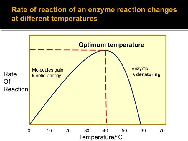affect of temperature on enzyme activity Like most chemical reactions, the rate of an enzyme-catalyzed reaction increases as the temperature is raised a ten degree centigrade rise in temperature will increase the activity of most enzymes by 50 to 100.