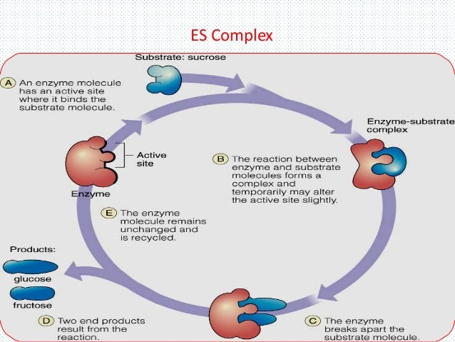 enzymology and catalytic mechanism essay Biology essays (examples)  2 pages document type: essay paper #:  enzymology and catalytic mechanism carbohydrate metabolism adenosine triphosphate atp.