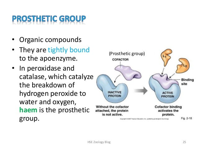 enzymes enzyme and variable groups What is the difference between enzyme and co-enzyme update cancel promoted by the function of coenzymes is to transport groups between enzymes chemical groups include hydride ions which are carried by coenzymes co-enzyme a not all enzymes that require co-enzyme for their function.