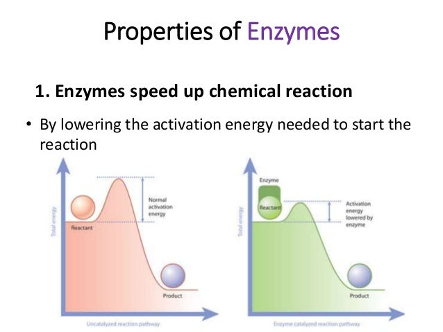 speed of chemical reactions prac Chapter 14: chemical kinetics besides information about the speed at which reactions occur chapter 14 reading guide and practice.