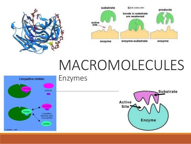 what type of macromolecule is an enzyme