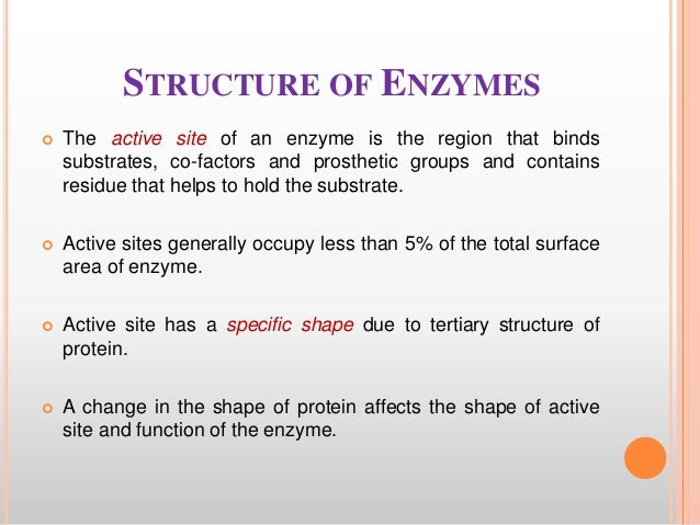 properties of enzymes lab report