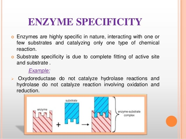 What is the chemical nature of enzymes?