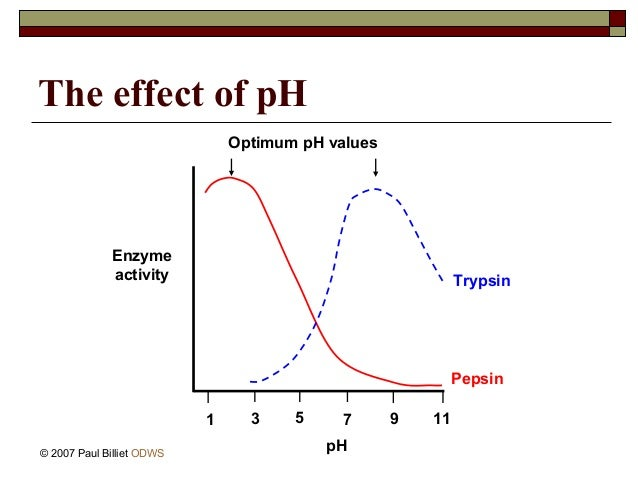 the effect of ph on enzymatic For every enzyme, there is an optimum ph value, at which the specific enzyme functions most actively any change in this ph significantly affects the enzyme activity.
