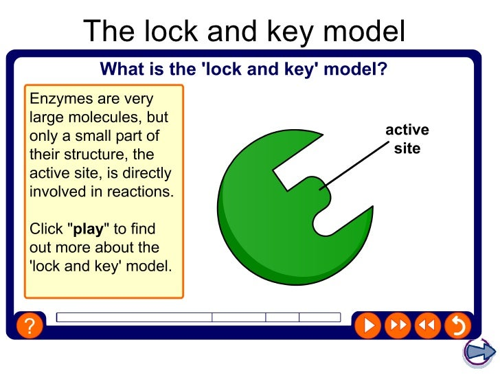lock and key hypothesis pdf