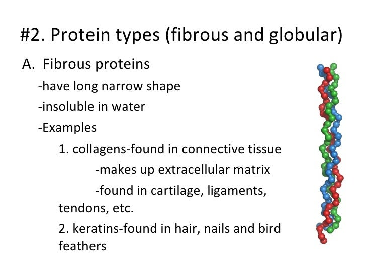 enzymes and proteins powerpoint