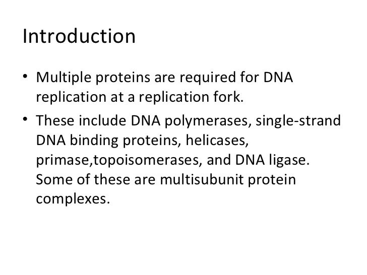 Enzymes and proteins in dna replication