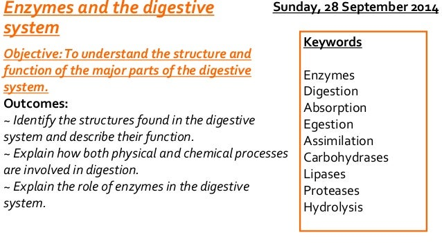 Enzymes and the digestive  system  Objective: To understand the structure and  function of the major parts of the digestiv...