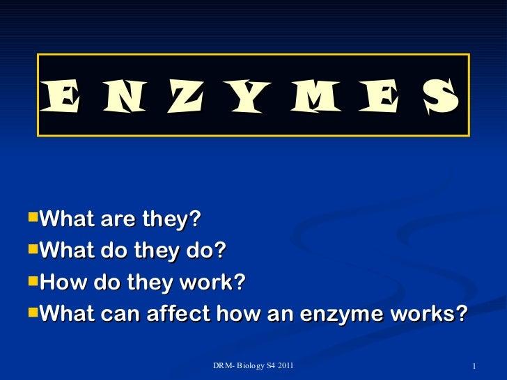 E N Z Y M E S <ul><li>What are they? </li></ul><ul><li>What do they do? </li></ul><ul><li>How do they work? </li></ul><ul>...