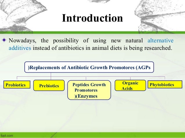 Enzymes in poultry nutrition- Mohammad Behroozlak Slide 3