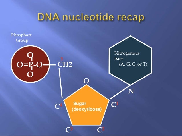 biology enzymes g c s e Biology i questions involving  mastering biology questions ch 6: thermodynamics enzymes  they may not resemble the enzyme's substrates d both (b) and (c) e.