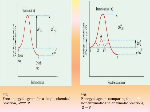 Enzyme Inhibitors, Activation energy and MEC.