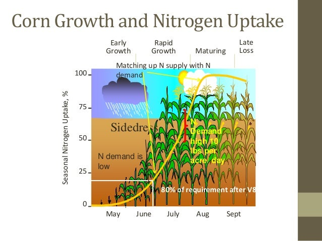 Historical Synthesis-Analysis of Changes in Grain Nitrogen Dynamics in Sorghum