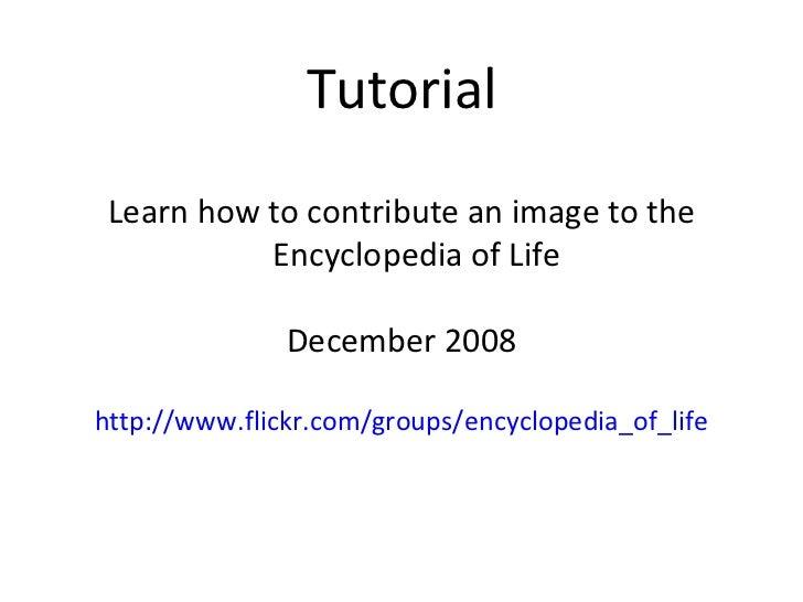 Tutorial <ul><li>Learn how to contribute an image to the Encyclopedia of Life </li></ul><ul><li>December 2008 </li></ul><u...