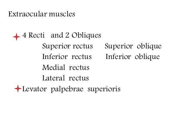 Extra ocular muscles ppt Slide 3