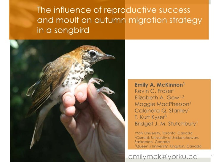 The influence of reproductive success and moult on autumn migration strategy in a songbird<br />Emily A. McKinnon1<br />Ke...