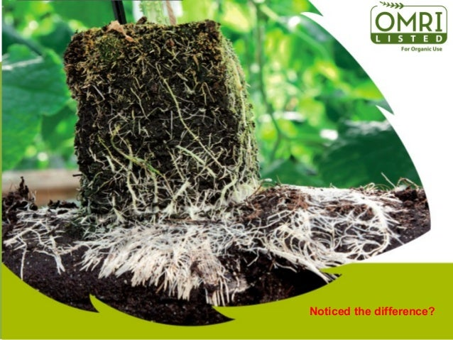 The first 7-9 weeks EU organic certified transpants grow out-of-soil and 80% of plantvitality &-resilience is determined i...