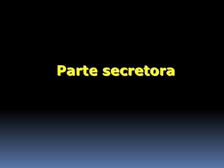 Parte secretora