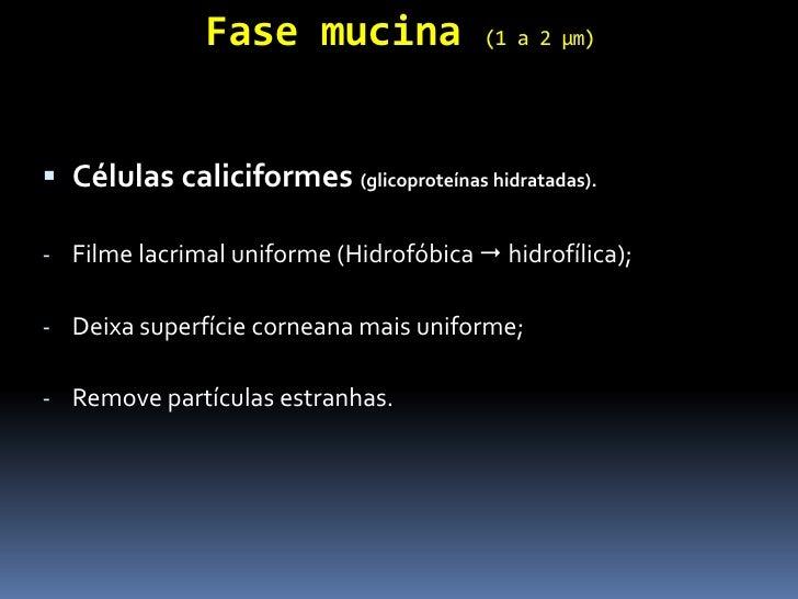 Fase mucina               (1 a 2 µm) Células caliciformes (glicoproteínas hidratadas).- Filme lacrimal uniforme (Hidrofób...