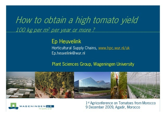 How to obtain a high tomato yield 100 kg per m2 per year or more ? Ep Heuvelink Horticultural Supply Chains, www.hpc.wur.n...