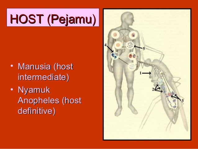 HOST (Pejamu)• Manusia (host  intermediate)• Nyamuk  Anopheles (host  definitive)                    17