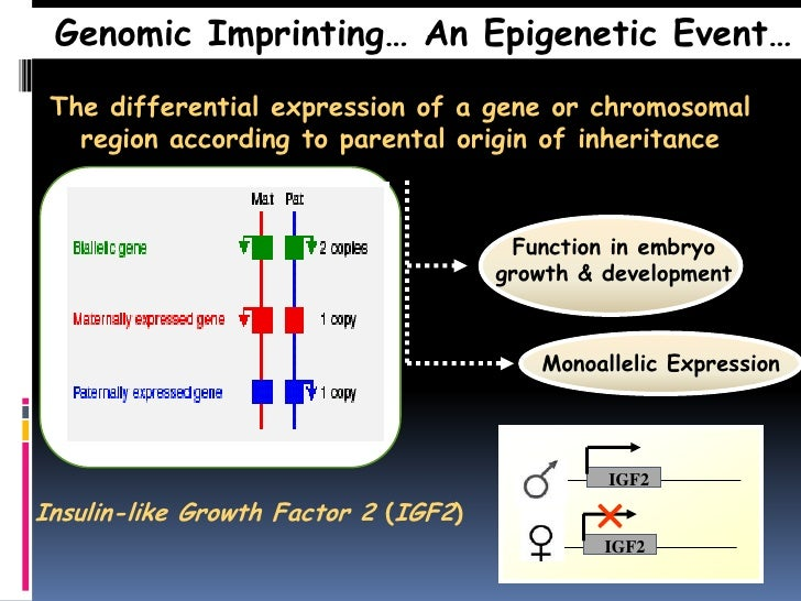 Genomic Imprinting as a Mechanism of Reproductive ... |Genomic Imprinting Inheritance