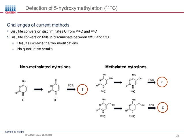 DNA Methylation: An Essential Element in Epigenetics Facts