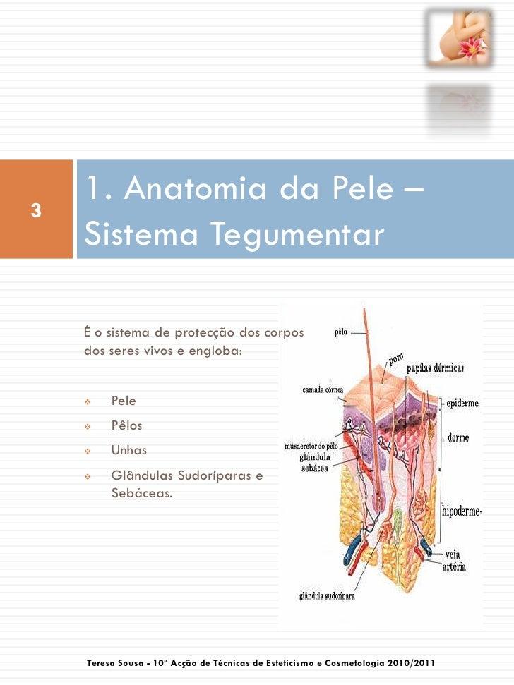 Epilação e depilação Slide 3