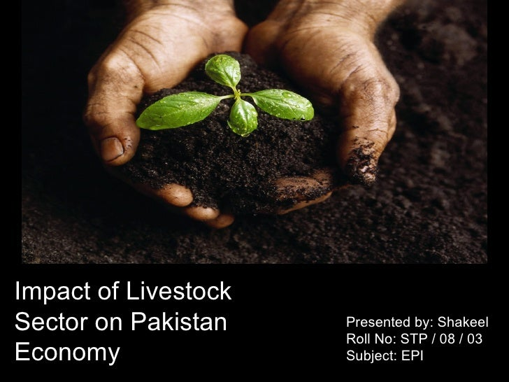 Impact of Livestock Sector on Pakistan Economy Presented by: Shakeel Roll No: STP / 08 / 03 Subject: EPI