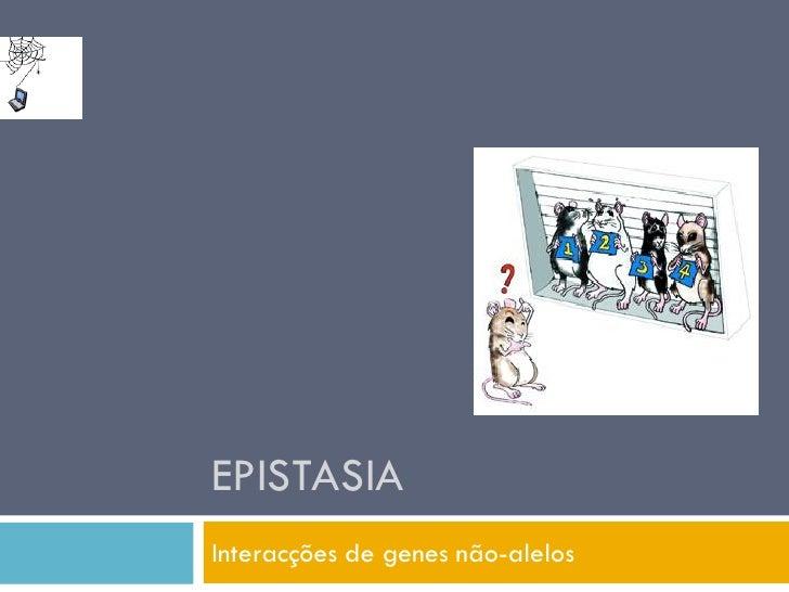 EPISTASIA Interacções de genes não-alelos