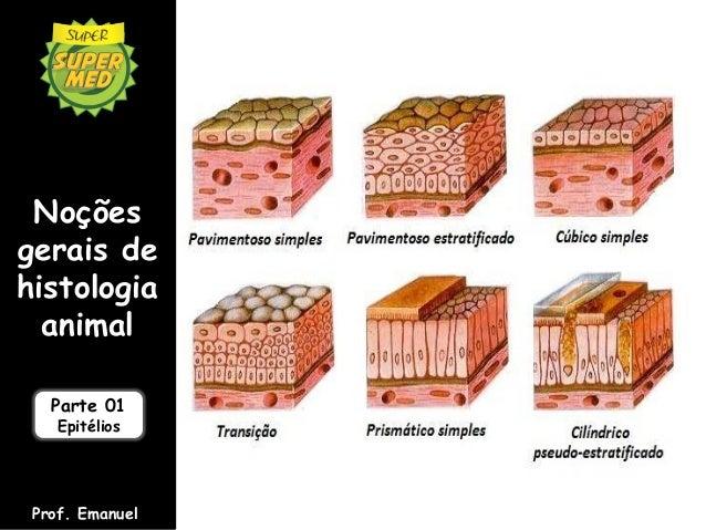 Noçõesgerais dehistologia  animal   Parte 01    Epitélios Prof. Emanuel