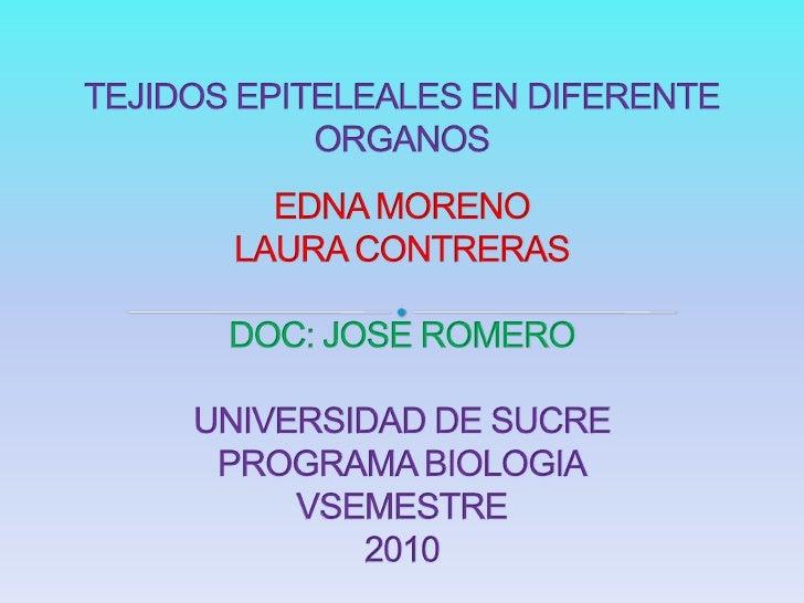 TEJIDOS EPITELEALES EN DIFERENTE ORGANOSEDNA MORENOLAURA CONTRERASDOC: JOSE ROMEROUNIVERSIDAD DE SUCREPROGRAMA BIOLOGIAVSE...