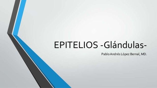 EPITELIOS -Glándulas- PabloAndrés López Bernal, MD.