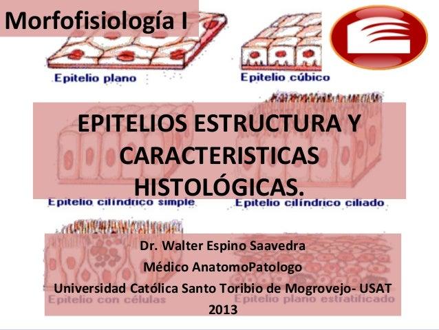 Morfofisiología I       EPITELIOS ESTRUCTURA Y           CARACTERISTICAS            HISTOLÓGICAS.                 Dr. Walt...