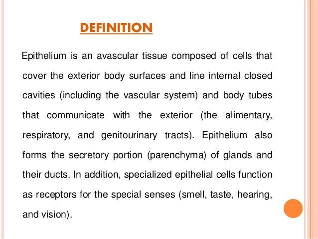 epithelial tissue definition - photo #3