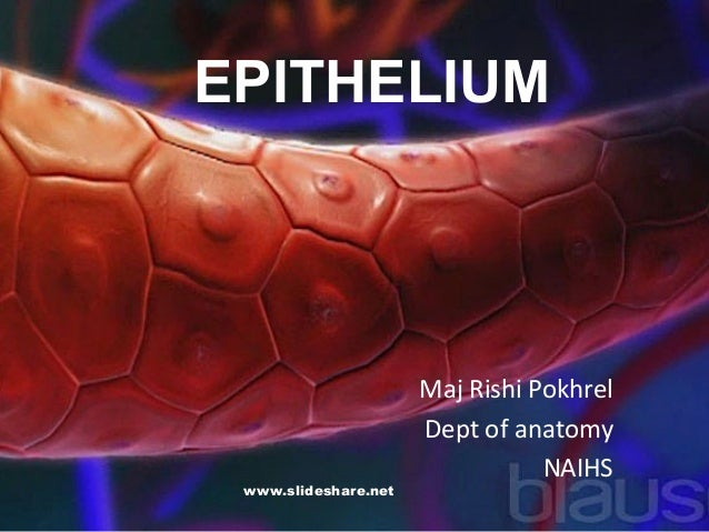 EPITHELIUM Maj Rishi Pokhrel Dept of anatomy NAIHS www.slideshare.net
