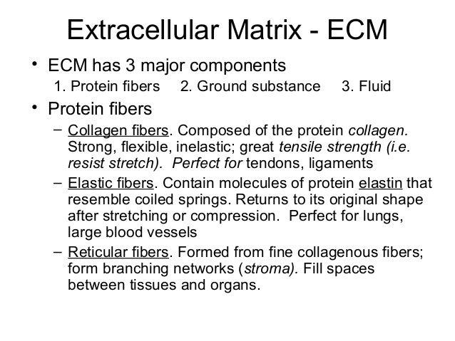 Epithelium, cells,tissues & histology