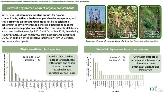 Phytoremediation of organic contaminants in soil: survey of species and associated techniques for future applications Slide 2