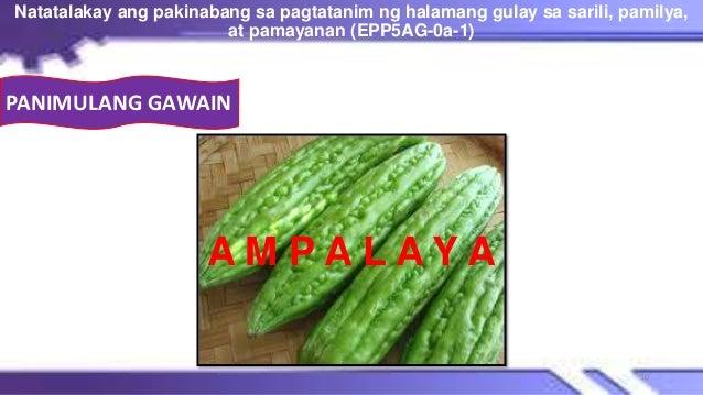 A M P A L A Y A Natatalakay ang pakinabang sa pagtatanim ng halamang gulay sa sarili, pamilya, at pamayanan (EPP5AG-0a-1) ...