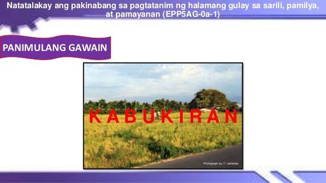 K A B U K I R A N Natatalakay ang pakinabang sa pagtatanim ng halamang gulay sa sarili, pamilya, at pamayanan (EPP5AG-0a-1...