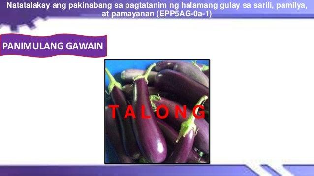 T A L O N G Natatalakay ang pakinabang sa pagtatanim ng halamang gulay sa sarili, pamilya, at pamayanan (EPP5AG-0a-1) 9 PA...