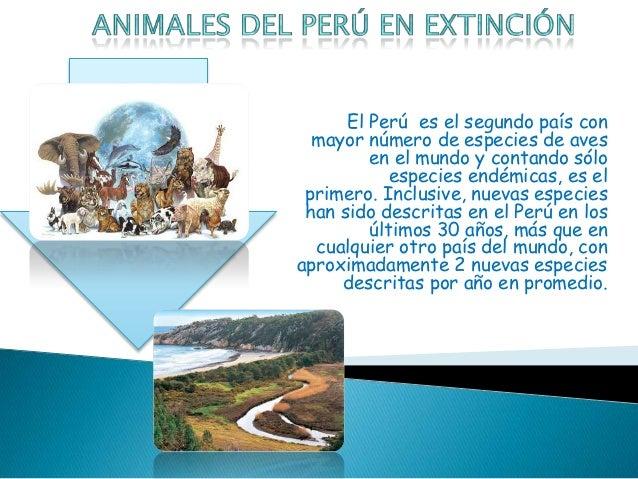 El Perú es el segundo país con  mayor número de especies de aves         en el mundo y contando sólo            especies e...