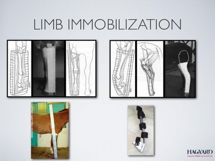 LIMB IMMOBILIZATION