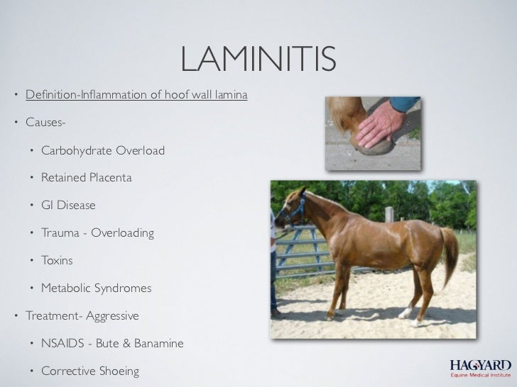 LAMINITIS•   Definition-Inflammation of hoof wall lamina•   Causes-    •   Carbohydrate Overload    •   Retained Placenta   ...