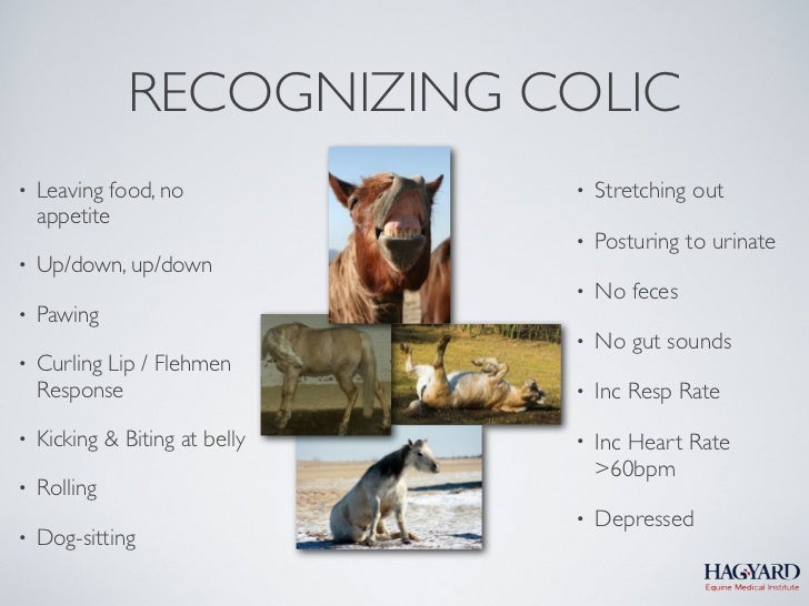 RECOGNIZING COLIC•   Leaving food, no            •   Stretching out    appetite                                •   Posturi...