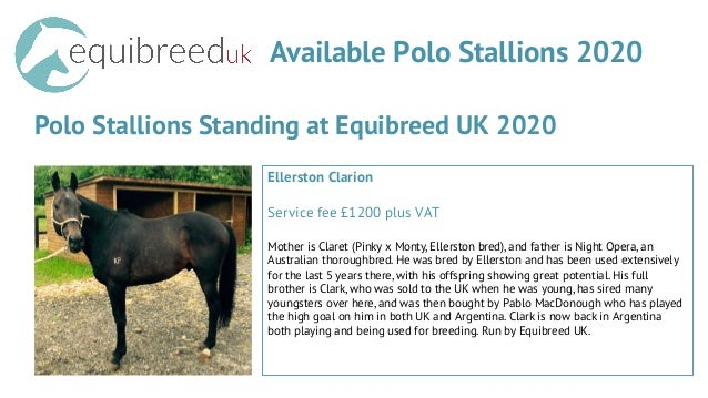 Available Polo Stallions 2020 Polo Stallions Standing at Equibreed UK 2020 Ellerston Clarion Service fee £1200 plus VAT Mo...